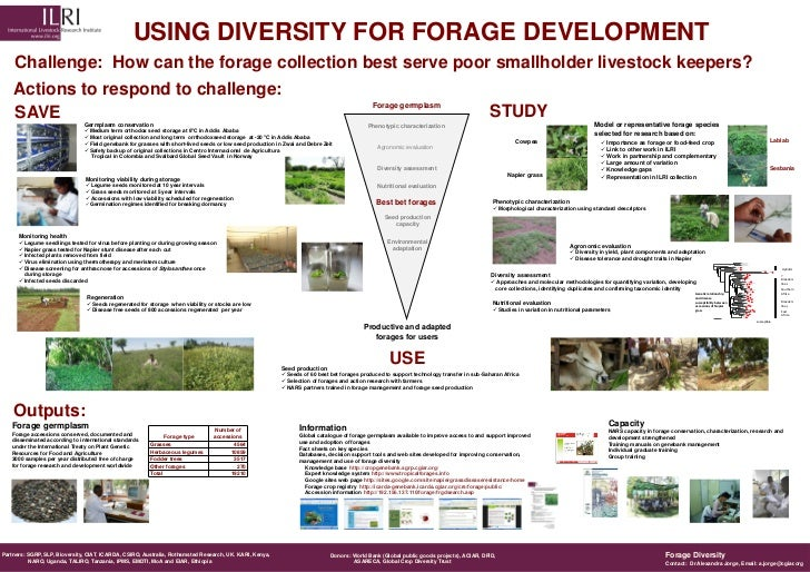 USING DIVERSITY FOR FORAGE DEVELOPMENT    Challenge: How can the forage collection best serve poor smallholder livestock k...