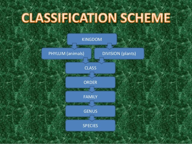 diversity in living organism Diversity in living organisms class 9 notes social science chapter 7 in pdf format for free download notes for cbse exams.