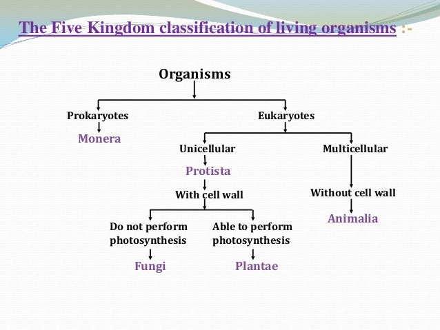 Image of: Concept Kingdoms 5 Chegg Diversity In Living Organisms