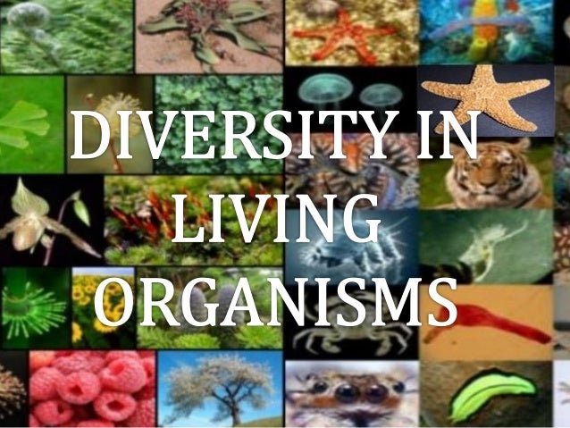 diversity in living organism There are approximately 20000 loci (genes) in the human genome most of these  code for proteins many of these proteins function as catalysts of chemical.