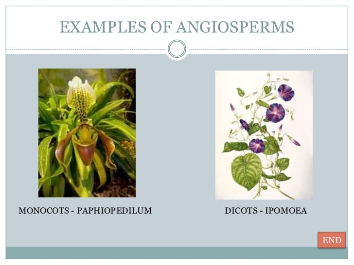 Diversity in plants 10 Examples Of Monocot Plants