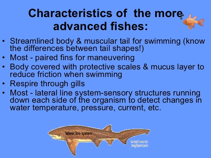Diversity of fishes for Characteristics of fish
