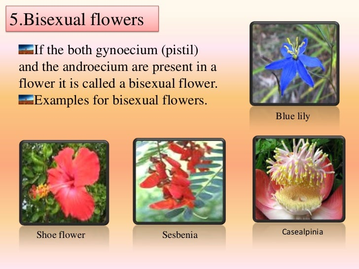 Examples of bisexual flowers