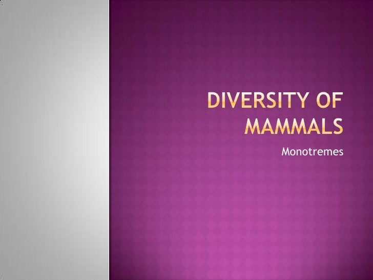 Diversity of Mammals<br />Monotremes<br />