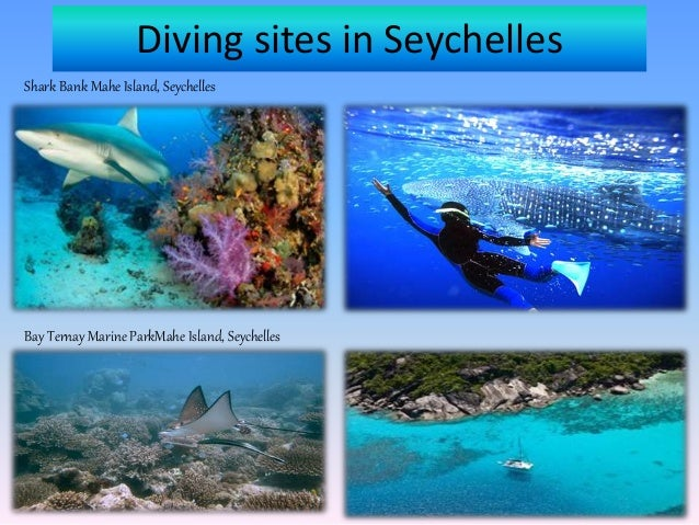 Diving Excursions in Mahe Seychelles Slide 3
