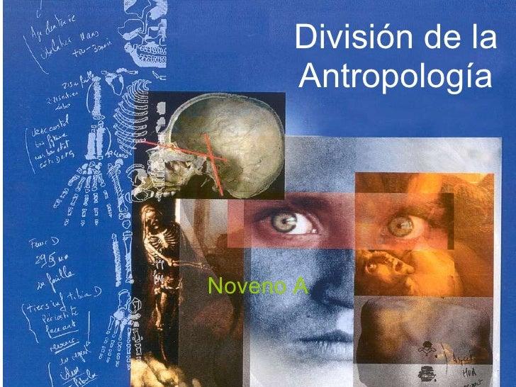 División de la Antropología Noveno A