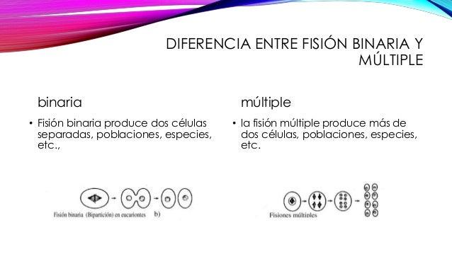 Diferencia entre forex y binarias