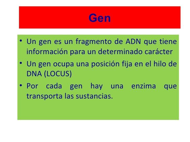 Gen <ul><li>Un gen es un fragmento de ADN que tiene información para un determinado carácter </li></ul><ul><li>Un gen ocup...