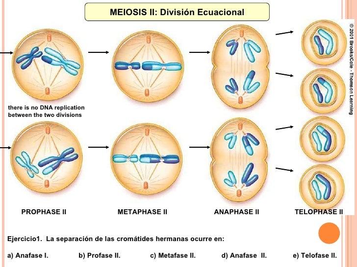 divisin celular mitosis meiosis control industrial 2009 10 728