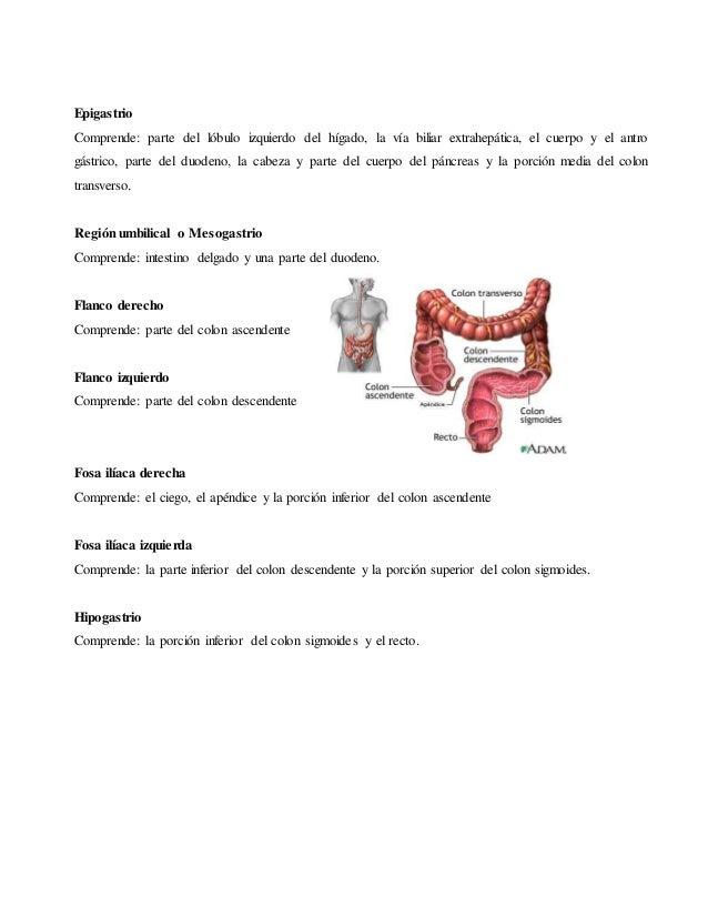 División del abdomen en cuadrantes y cavidad peritoneal