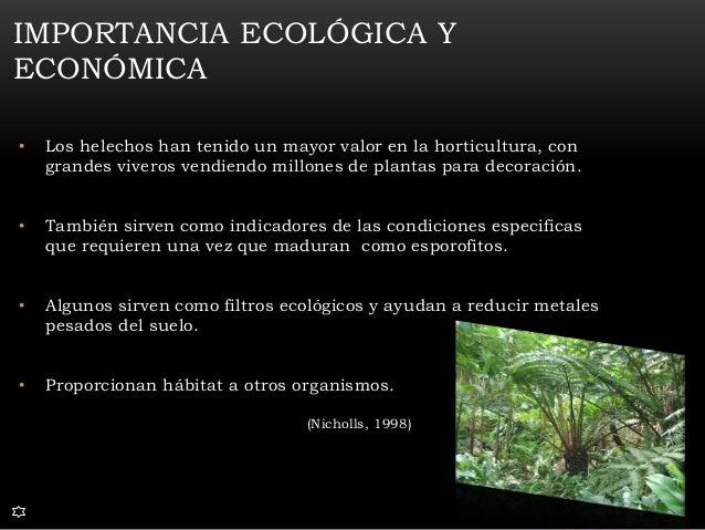 Divisi n polypodiophyta for Importancia de un vivero