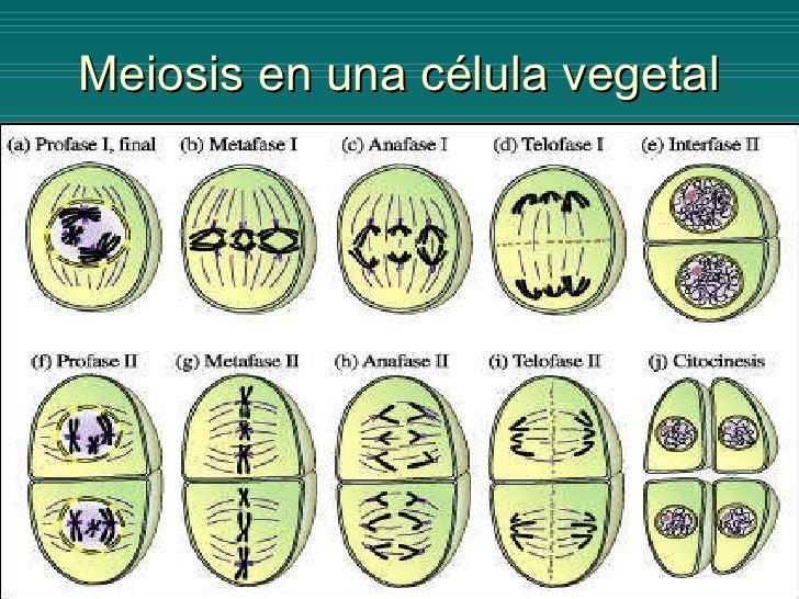 BIOLOGIA - Division celular