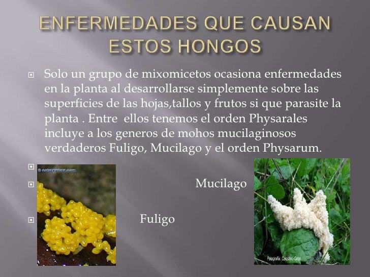 Division myxomycota - Enfermedades de las plantas de interior ...