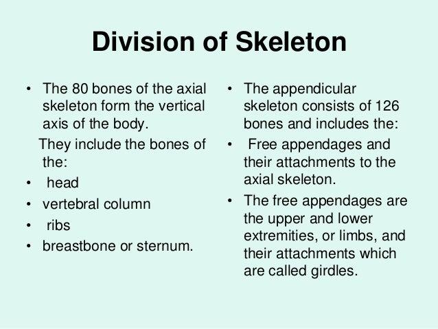 division of skeletal system pdf