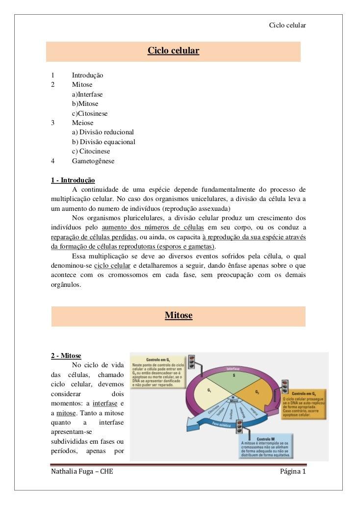 Ciclo celular                                 Ciclo celular1      Introdução2      Mitose       a)Interfase       b)Mitose...