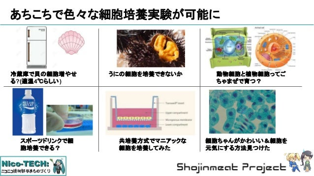 あちこちで色々な細胞培養実験が可能に 冷蔵庫で貝の細胞増やせ る?(適温4℃らしい) うにの細胞を培養できないか 動物細胞と植物細胞ってご ちゃまぜで育つ? スポーツドリンクで細 胞培養できる? 共培養方式でマニアックな 細胞を培養してみた 細...