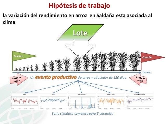 Hipótesis de trabajo la variación del rendimiento en arroz en Saldaña esta asociada al clima  Lote Siembra  Cosecha  tiemp...