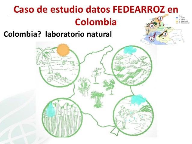 Caso de estudio datos FEDEARROZ en Colombia Colombia? laboratorio natural