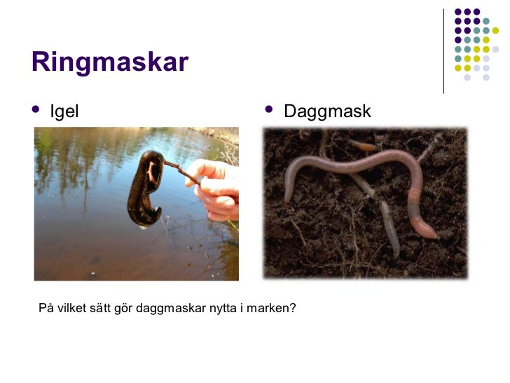 Djurgrupper Slide 3