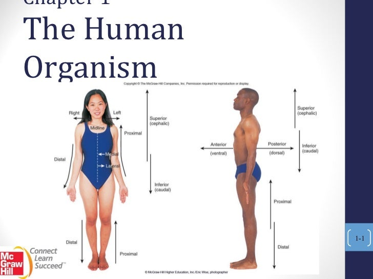 Chapter 1  The Human Organism 1-