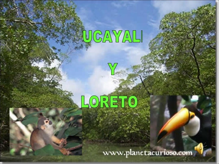 UCAYALI  Y  LORETO