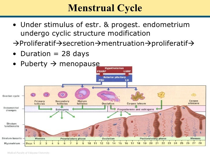physiology of the menstrual cycle Endocrine system: basic mechanisms and the menstrual cycle by tammy nguyen curriculum expectations e3 demonstrate an understanding of the anatomy and physiology of human body systems, and explain the mechanisms that enable the body to maintain homeostasis.