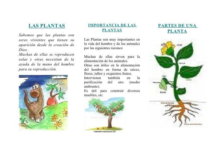 Triptico de las plantas for Cuales son las partes de un arbol