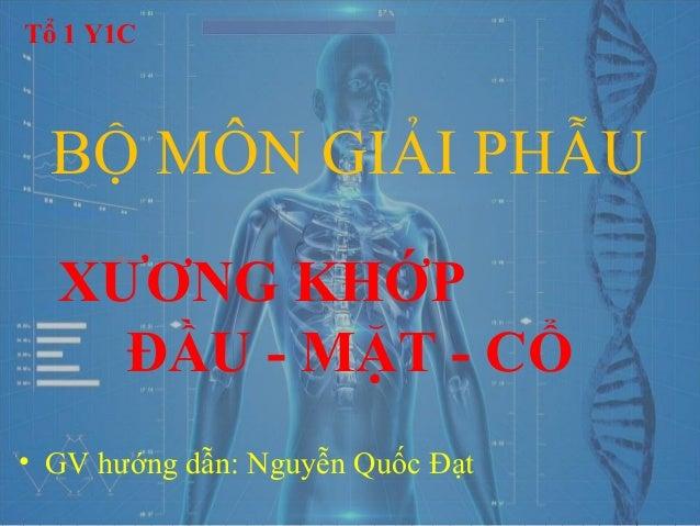 Viet NT BỘ MÔN GIẢI PHẪU XƯƠNG KHỚP ĐẦU - MẶT - CỔ • GV hướng dẫn: Nguyễn Quốc Đạt Tổ 1 Y1C