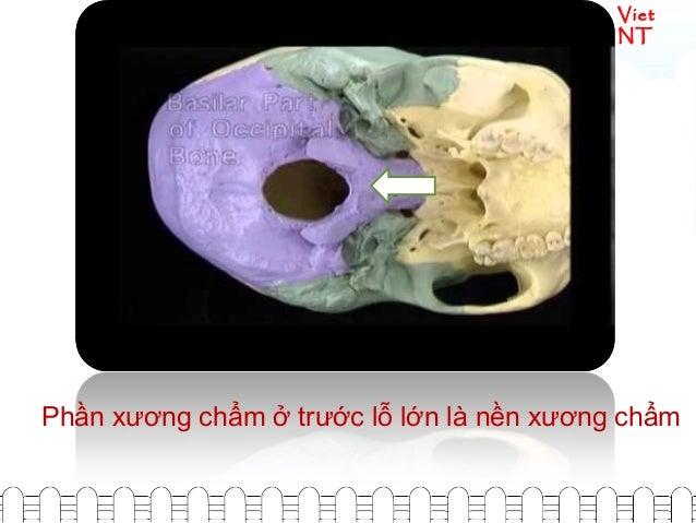 Viet NT Phần xương chẩm ở trước lỗ lớn là nền xương chẩm