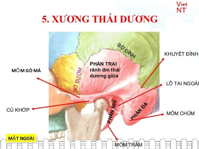Viet NT PHẦN ĐÁ PHẦN TRAI rãnh đm thái dương giữa PHẦNNHĨ CỦ KHỚP BỜ ĐỈNH BỜBƯỚM KHUYẾT ĐỈNH M T NGOÀIẶM T NGOÀIẶ LỖ TAI N...