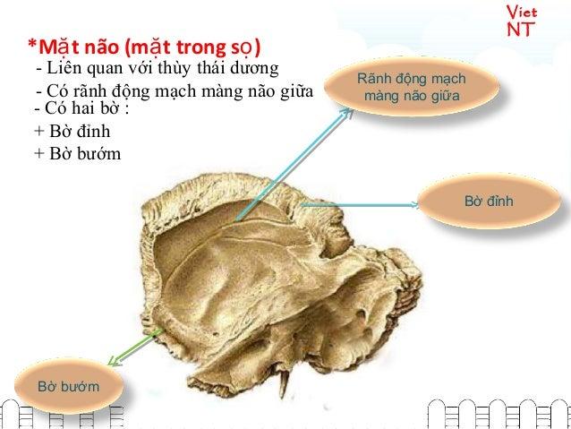 Viet NT *M t não (m t trong s )ặ ặ ọ - Liên quan với thùy thái dương - Có rãnh động mạch màng não giữa Rãnh động mạch màng...