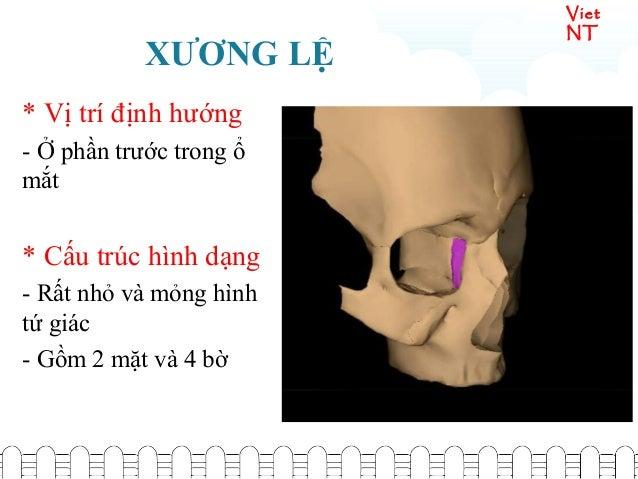Viet NT XƯƠNG LỆ * Vị trí định hướng - Ở phần trước trong ổ mắt * Cấu trúc hình dạng - Rất nhỏ và mỏng hình tứ giác - Gồm ...