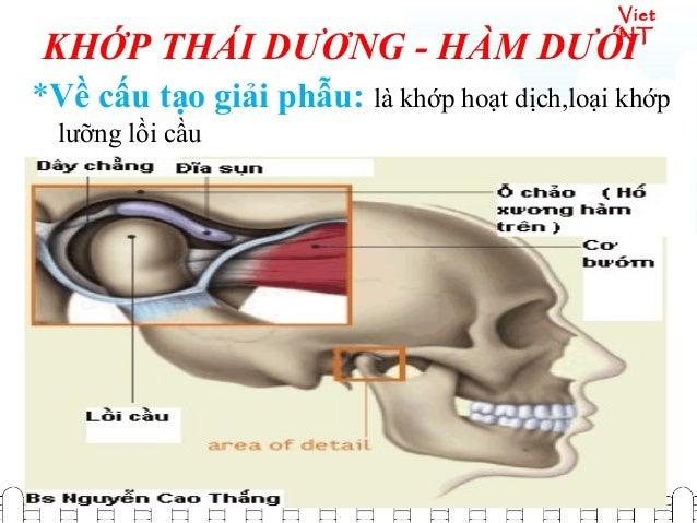 Viet NT *Về sinh lí : một khớp quan trọng trong động tác nhai
