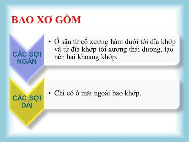 Viet NTBAO HOẠT DỊCH Là bao mỏng, lót mặt trong bao xơ , nhưng không phủ đĩa khớp. Bao gồm : BAO HOẠT DỊCH