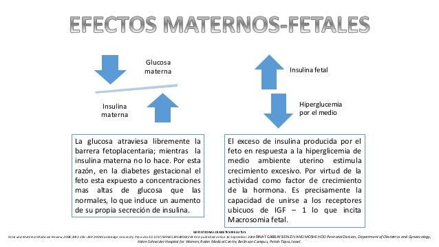 Glucosa materna Insulina materna Insulina fetal Hiperglucemia por el medio La glucosa atraviesa libremente la barrera feto...