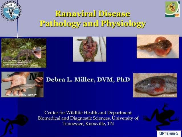 Ranaviral Disease Pathology and Physiology Debra L. Miller, DVM, PhD Center for Wildlife Health and Department Biomedical ...