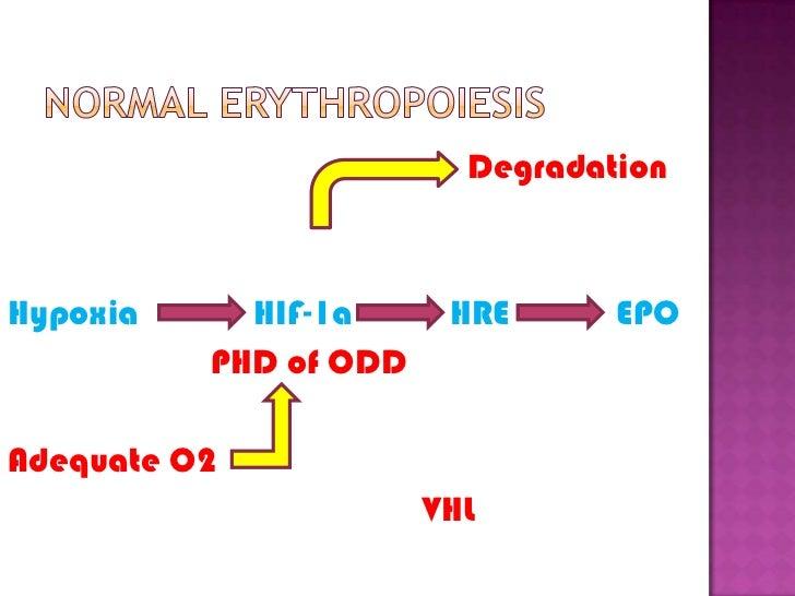 Normal erythropoiesis<br />Degradation<br />Hypoxia             HIF-1a           HRE            EPO<br />                 ...