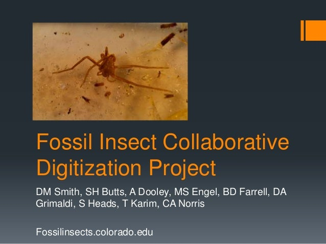 Fossil Insect Collaborative Digitization Project DM Smith, SH Butts, A Dooley, MS Engel, BD Farrell, DA Grimaldi, S Heads,...