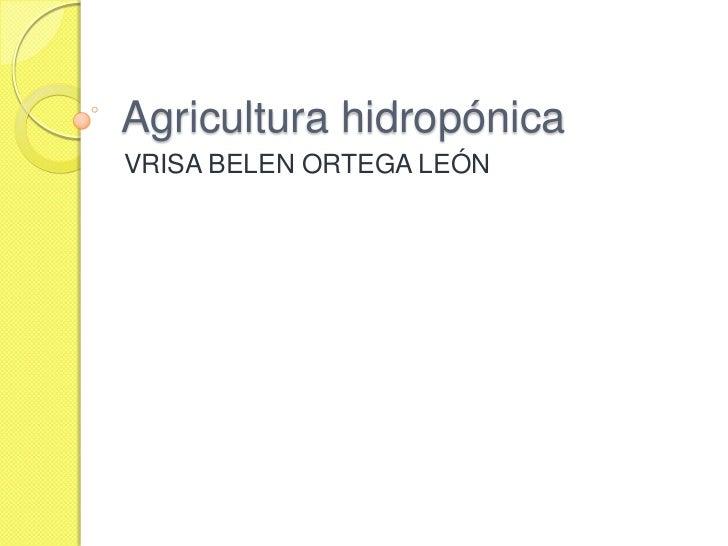Agricultura hidropónica<br />VRISA BELEN ORTEGA LEÓN<br />