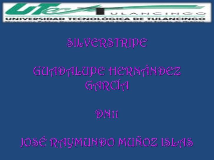 SILVERSTRIPE GUADALUPE HERNÁNDEZ       GARCÍA          DN11JOSÉ RAYMUNDO MUÑOZ ISLAS