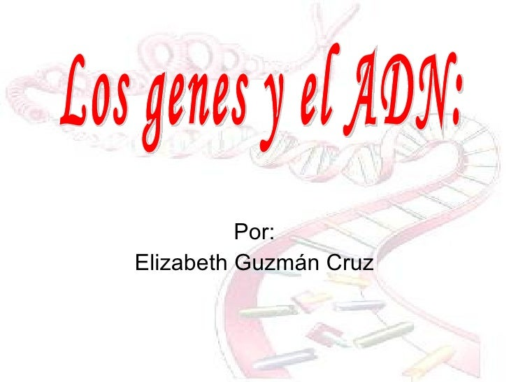 Por : Elizabeth Guzmán Cruz Los genes y el ADN: