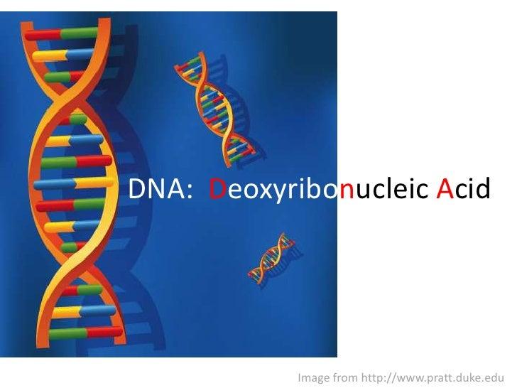 DNA:  Deoxyribonucleic Acid<br />Image from http://www.pratt.duke.edu<br />