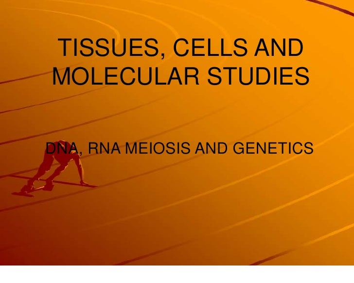 TISSUES, CELLS AND MOLECULAR STUDIES<br />DNA, RNA MEIOSIS AND GENETICS<br />