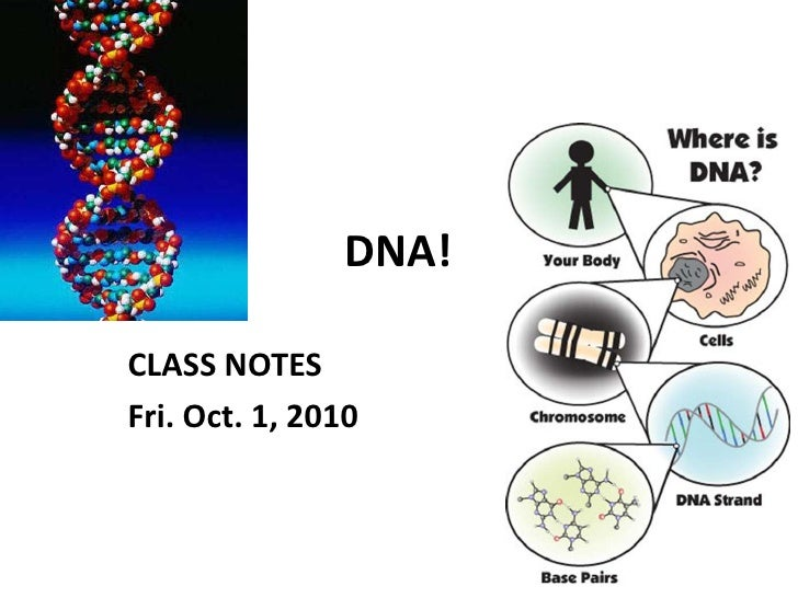 DNA!<br />CLASS NOTES<br />Fri. Oct. 1, 2010<br />