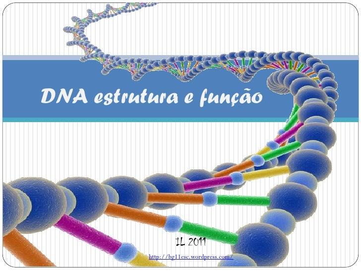 DNA estrutura e função                   IL 2011          http://bg11esc.wordpress.com/