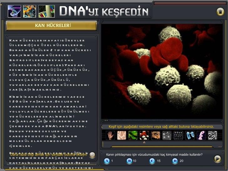 KAN HÜCRELERİ Keşif için aşağıdaki resimlere veya sağ alttaki butona tıklayabilirsiniz. Kan hücreleri hayati görevler üsle...
