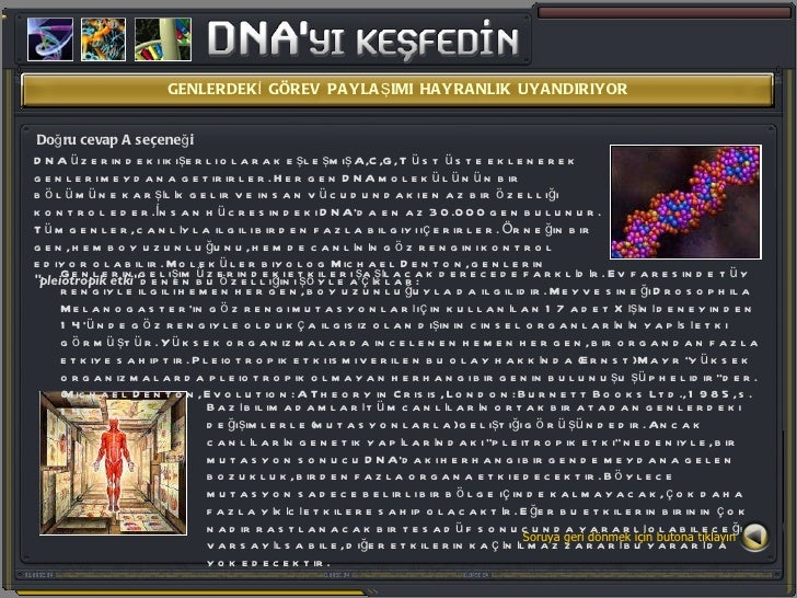 GENLERDEKİ GÖREV PAYLAŞIMI HAYRANLIK UYANDIRIYOR Doğru cevap A seçeneği DNA üzerindeki ikişerli olarak eşleşmiş A,C,G, T ü...