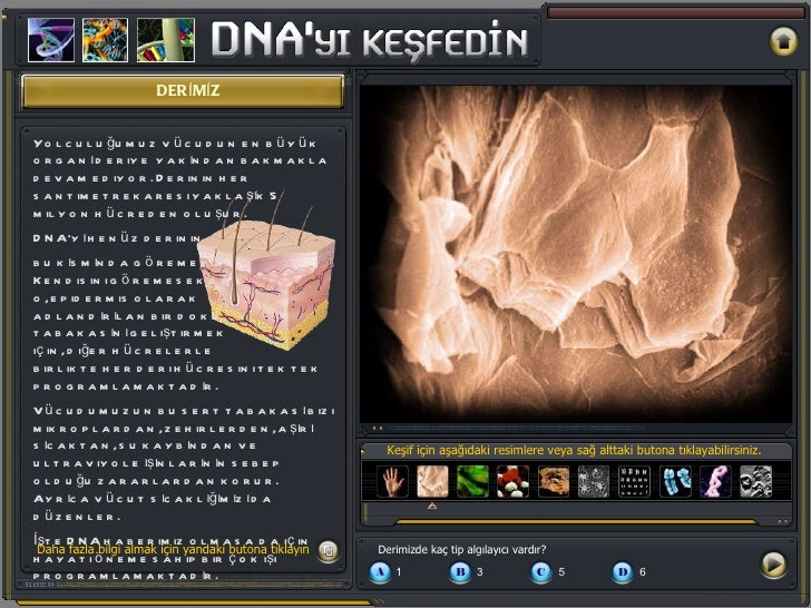 DERİMİZ Keşif için aşağıdaki resimlere veya sağ alttaki butona tıklayabilirsiniz. Yolculuğumuz vücudun en büyük organı der...