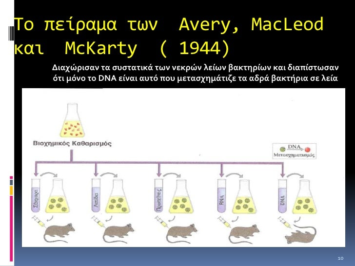Το πείραμα των Hershey και Chase 1952απετέλεσε την  οριστικήεπιβεβαίωση ότιτο  DNA είναι το γενετικό υλικό<br />11<br />Ιχ...