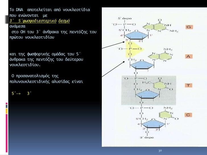 Στο εσωτερικό μέρος οι αζωτούχες βάσεις   συνδέονται σύμφωνα με τον κανόνα της συμπληρωματικότητας .     Α=Τ , GΞC. Οι αζω...